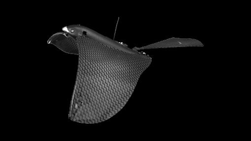 Bionic Bird détouré